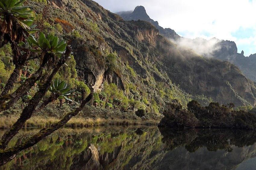 The sumptuous secrets of Rwenzori alpines