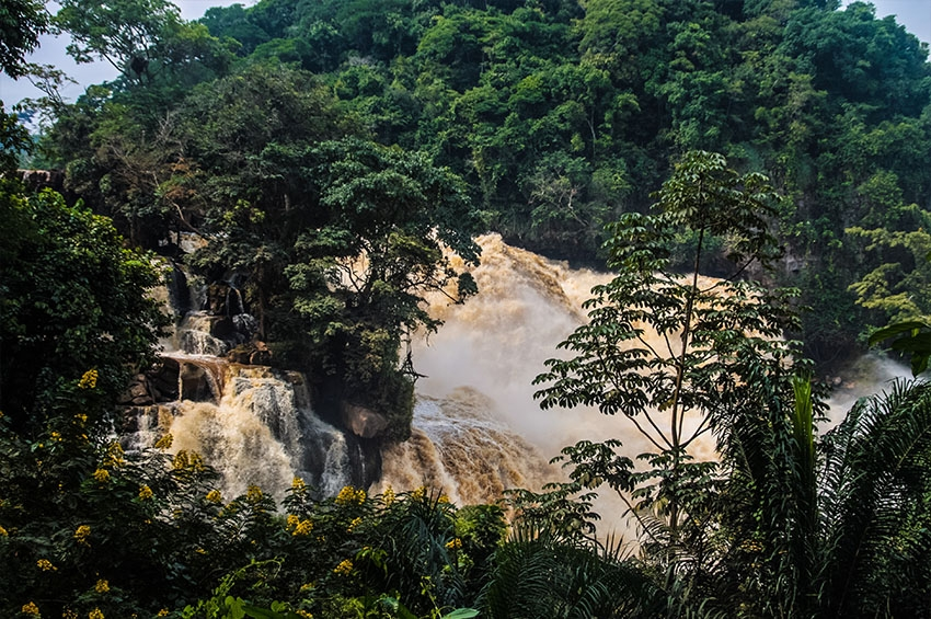 Feeling Central Africa's Forest Tears