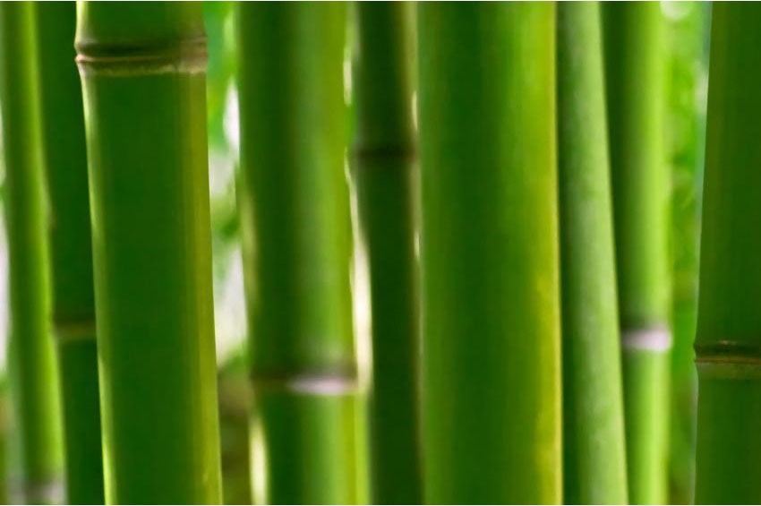 The Emerging Roar of Africa's Bamboo